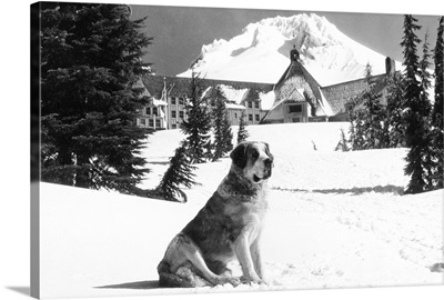 Timberline Lodge and Lady, the owner's St. Bernard, Mt. Hood, OR