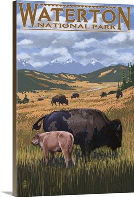 Waterton National Park, Canada - Buffalo Herd: Retro Travel Poster