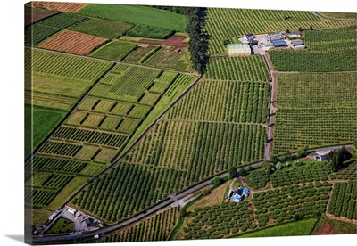 Apple Orchards, Loughgall, Great Britain, UK