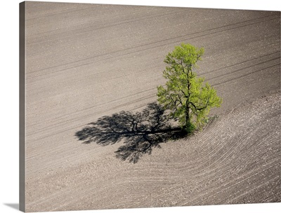 Lonely Tree, Richmond, Canada - Aerial Photograph