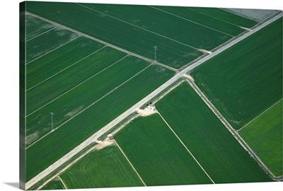 Rice Fields, Ebro Delta, Spain - Aerial Photograph