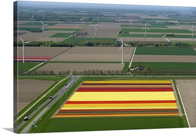 Tulips Fields, Zeewolde, Holland - Aerial Photograph