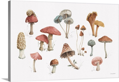 Mushroom Medley 01