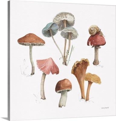 Mushroom Medley 02