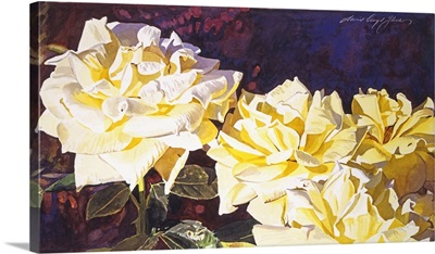 211 Palace Roses