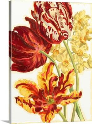Etude de Tulipes IV