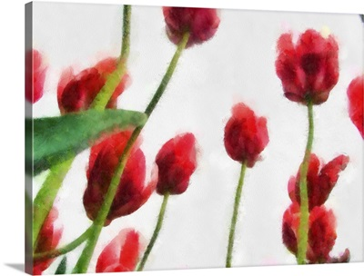 Red Tulips from the Bottom Up I