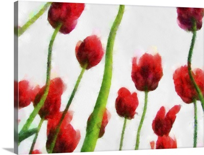 Red Tulips from the Bottom Up II