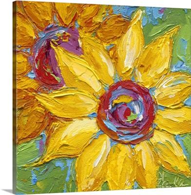 Red Yellow Sunflower