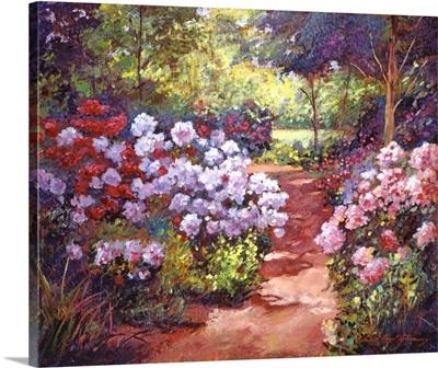 Rhododendron Stroll