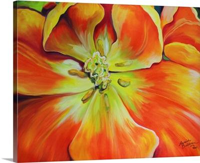Holland Tulip Insight