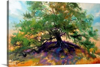 Oak Tree 002