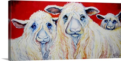 Sweet Wensleydales Sheep