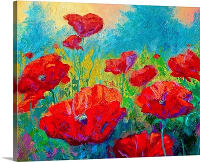 Field of Red Poppies