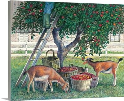Apple lovers - goats