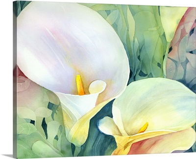 Brigets arum lily