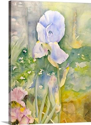 French irises