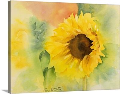 Gentle Sunflower