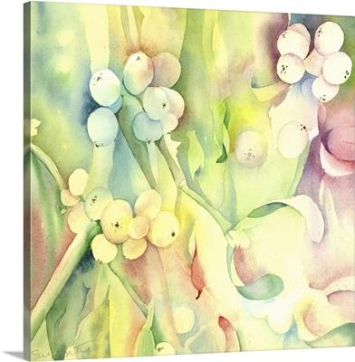 Mistletoe - Druids delight