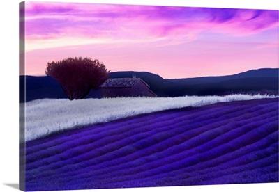 Provence at Dusk