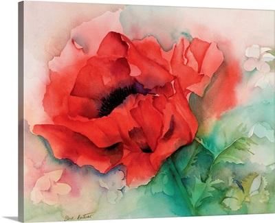 Shroton poppy
