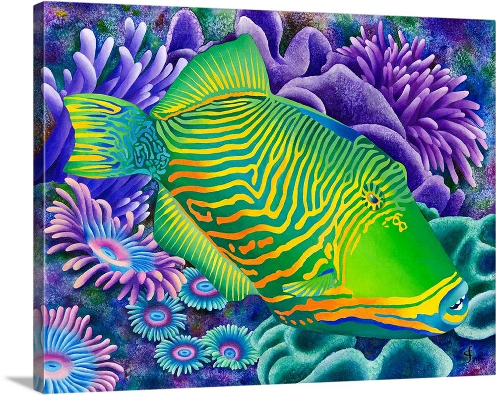 undulated trigger fish wall art canvas prints framed prints wall