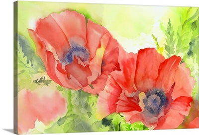 Wet June Poppies