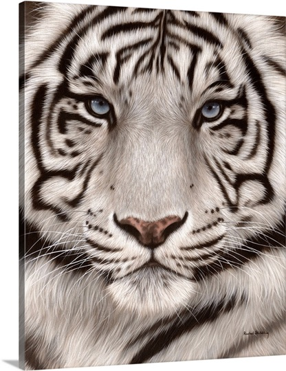 White tiger close up face - photo#15