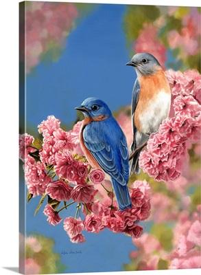 Bluebird Quartet