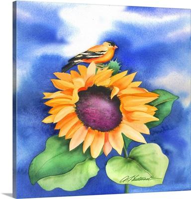 Goldfinch Sunflower