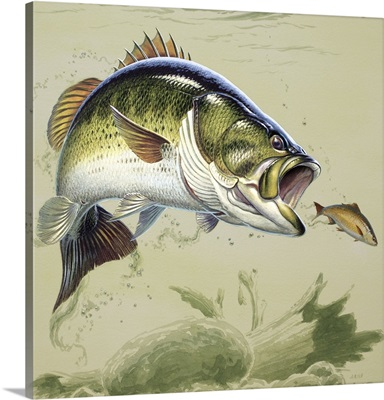 Leaping bass IV