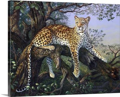 Leopards Domain