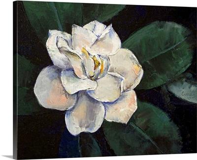 Gardenia Oil Painting