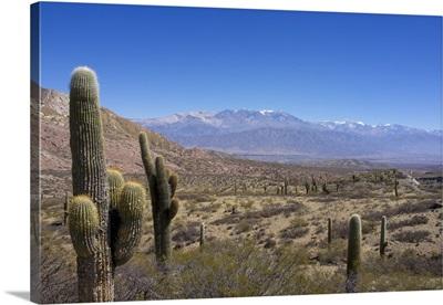 Cardones National Park