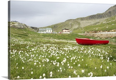 Eriophorum, And Red Boat
