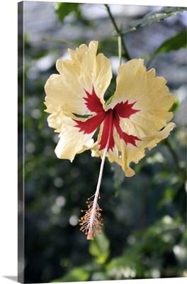 leaf transparence