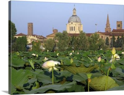 Mantova and lotus flowers