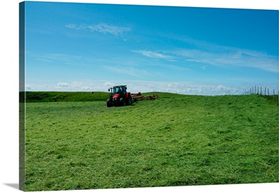 Norway, Haugesund: moving cut grass to let it dry in the sun