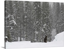 Dog sitting on the snow covered ground, while snow falls, Donner Summit, California