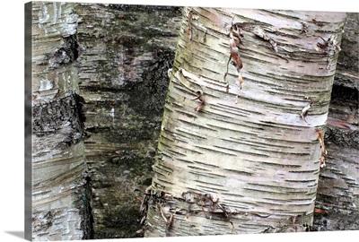 Aspen Detail