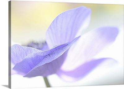 Blue Beauty II