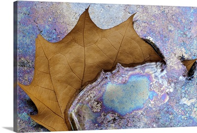 Blue Iridescence Swallowing Brown Leaf