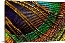 Bright Color Detail of Feather