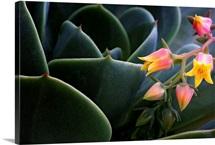 Desert Flower in Cactus Leaves