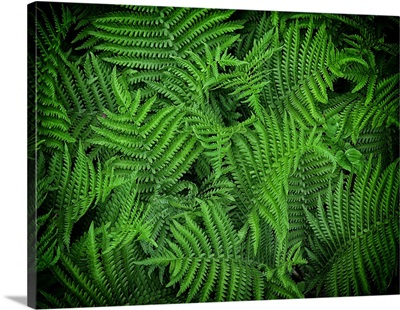 Flowing Ferns