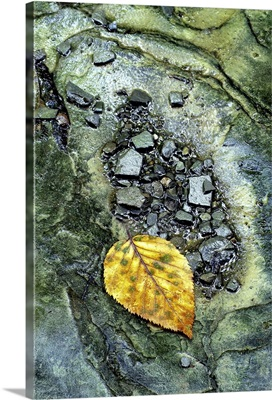 Golden Leaf in Emerald Stream