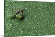 Hiding in a Sea of Green