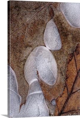 Ice Droplets on Brown Leaf