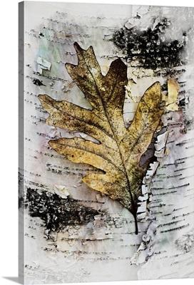 Oak in Birch