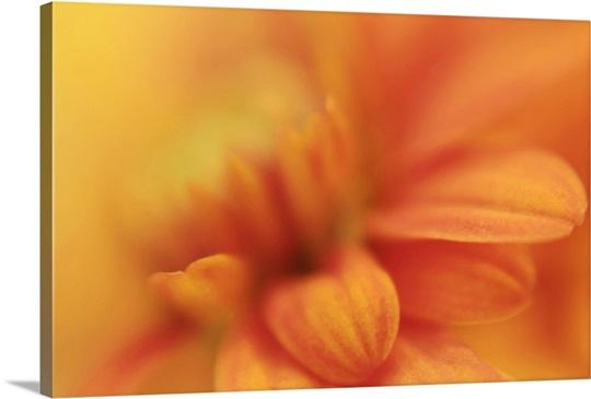 Orange Daisy in Soft Focus
